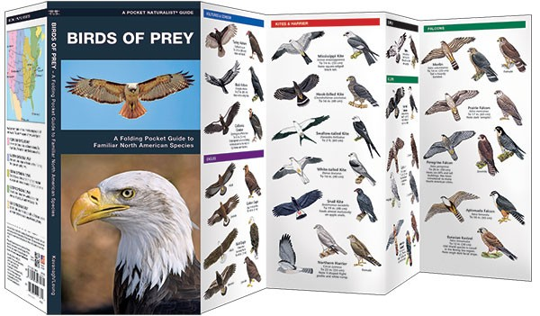 PNG-BirdsofPrey
