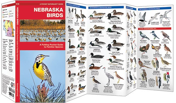 The Cornhusker State is an undulating plain that slopes gradually from northwest to southwest with semiarid high plains and over 2,000 lakes and is the permanent or migratory home of 455 species of birds including the state bird – the Western meadowlark.