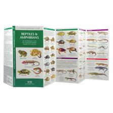 Reptile & Amphibians
