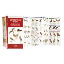 Grasslands Birds