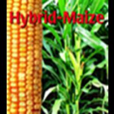 Hybrid-Maize 2016