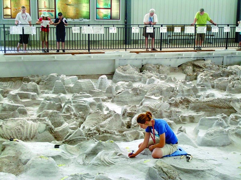 Ashfall Fossil Beds timed ticket July 23 @ 930am | Tickets ...