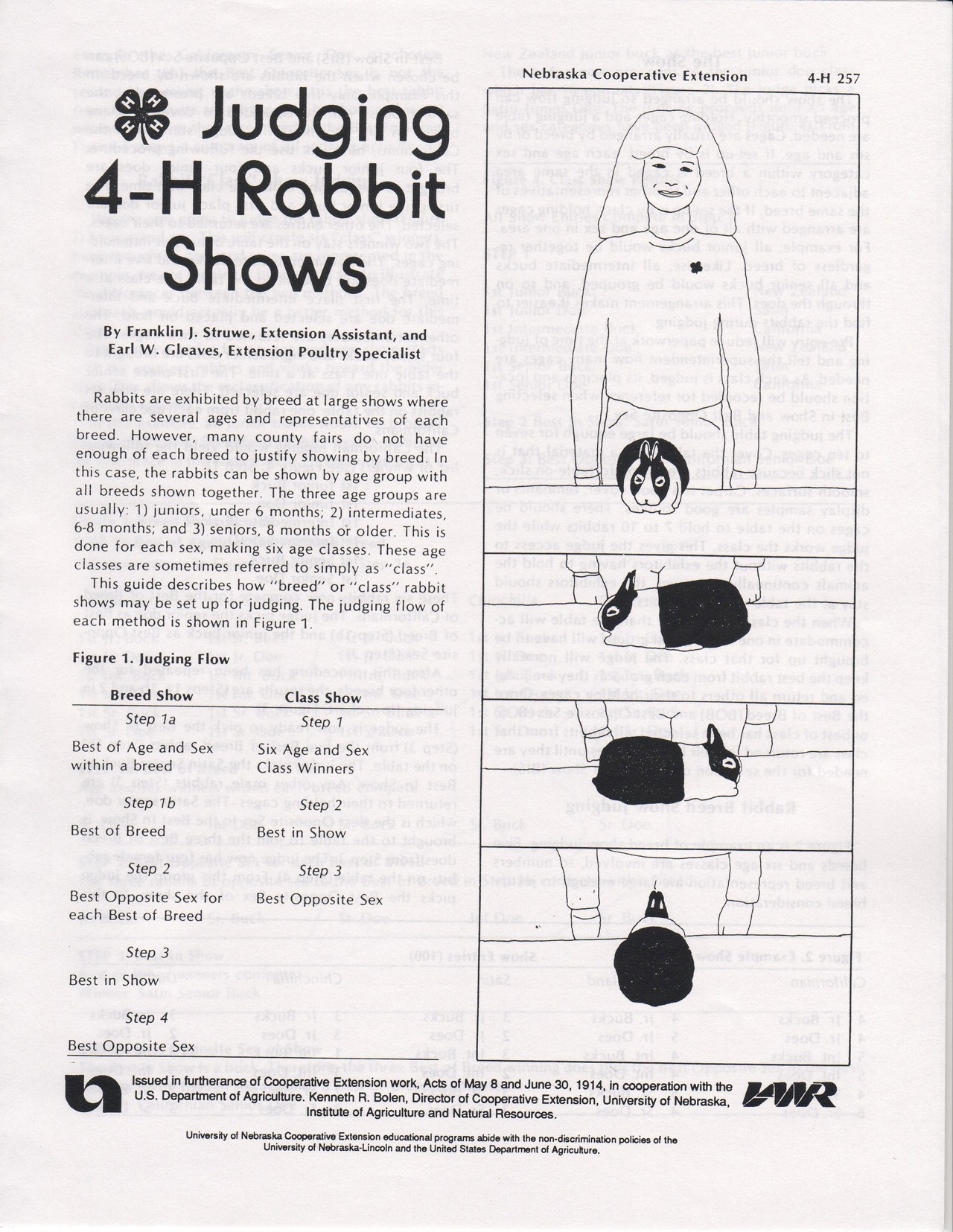 Judging 4H Rabbit Shows