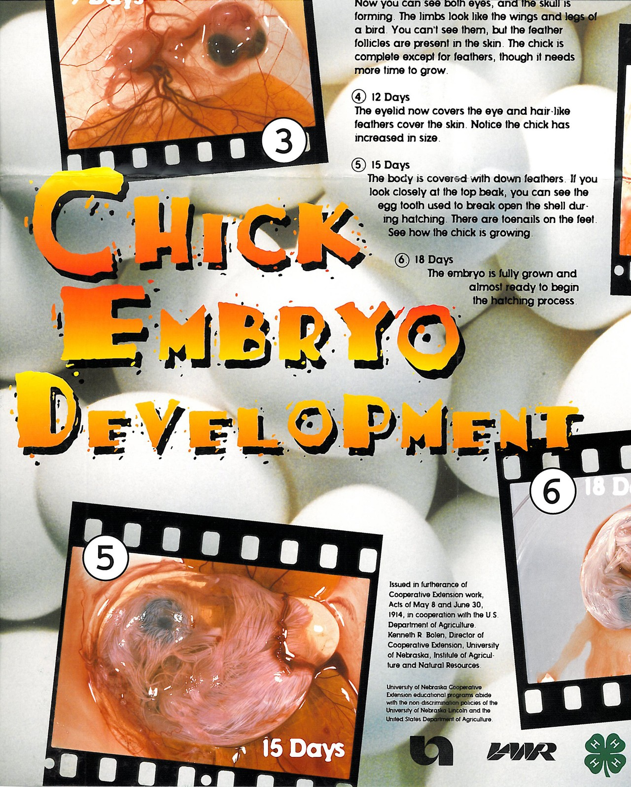 Embryology Poster