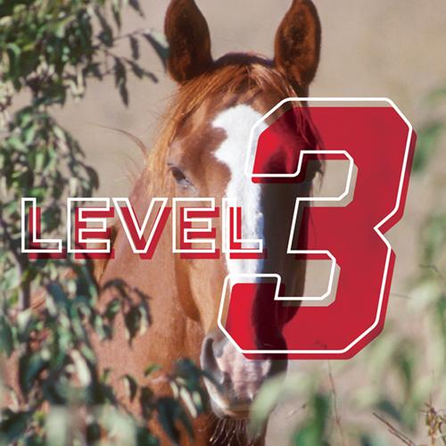 Horseman: 4-H Advancement Level 3 Online Study Course