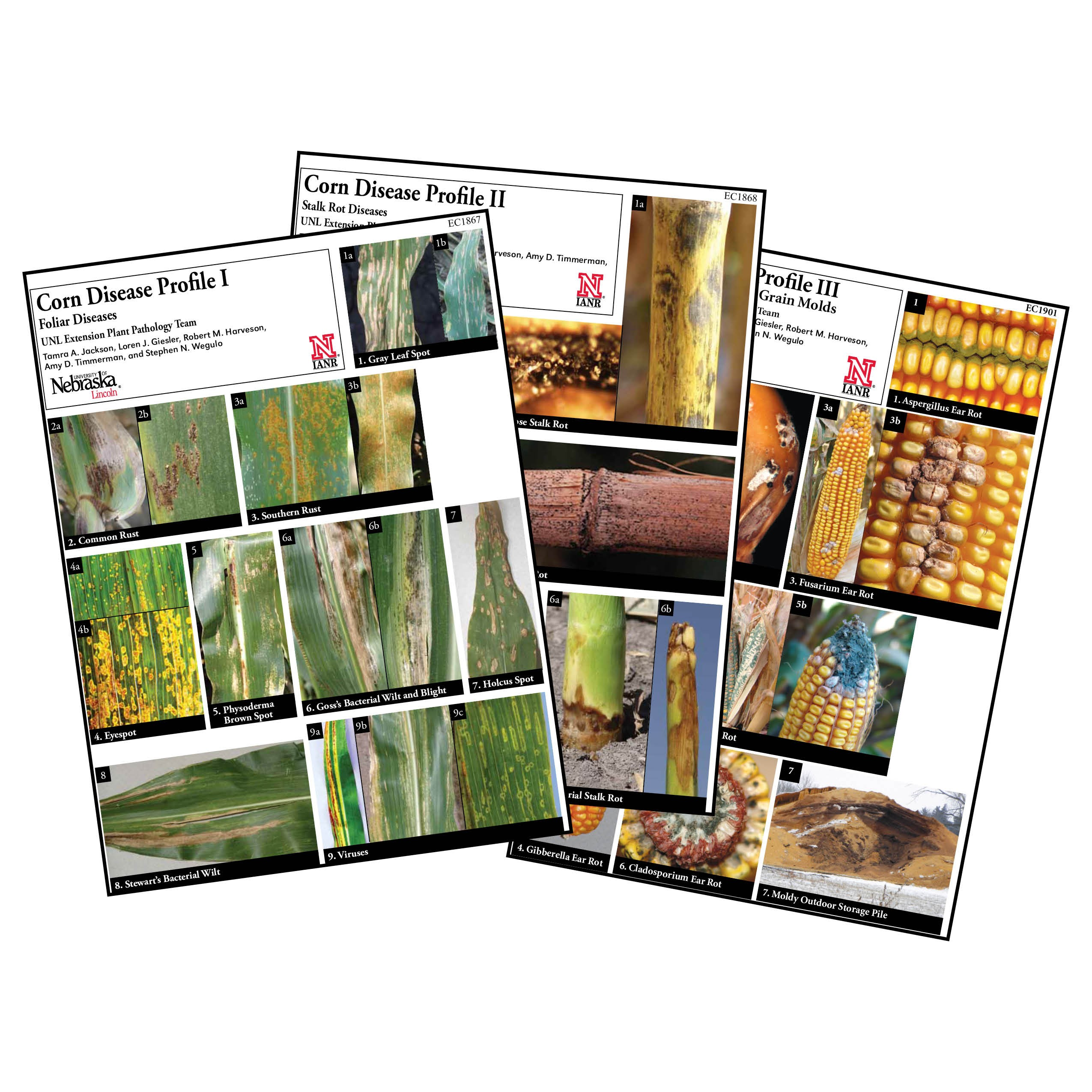 Corn Disease Profiles