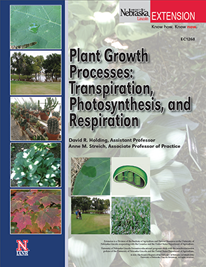 Plant Growth Processes