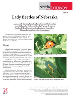Lady Beetles of Nebraska