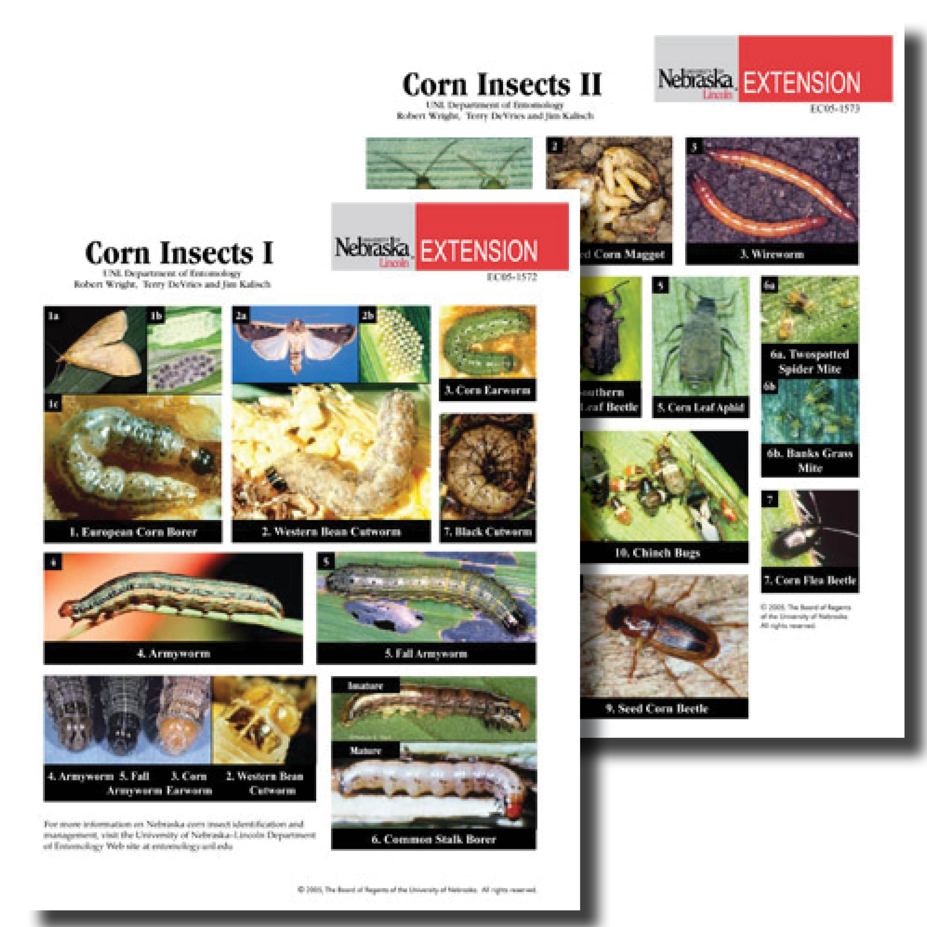 Corn Insects Photo Identification Guides