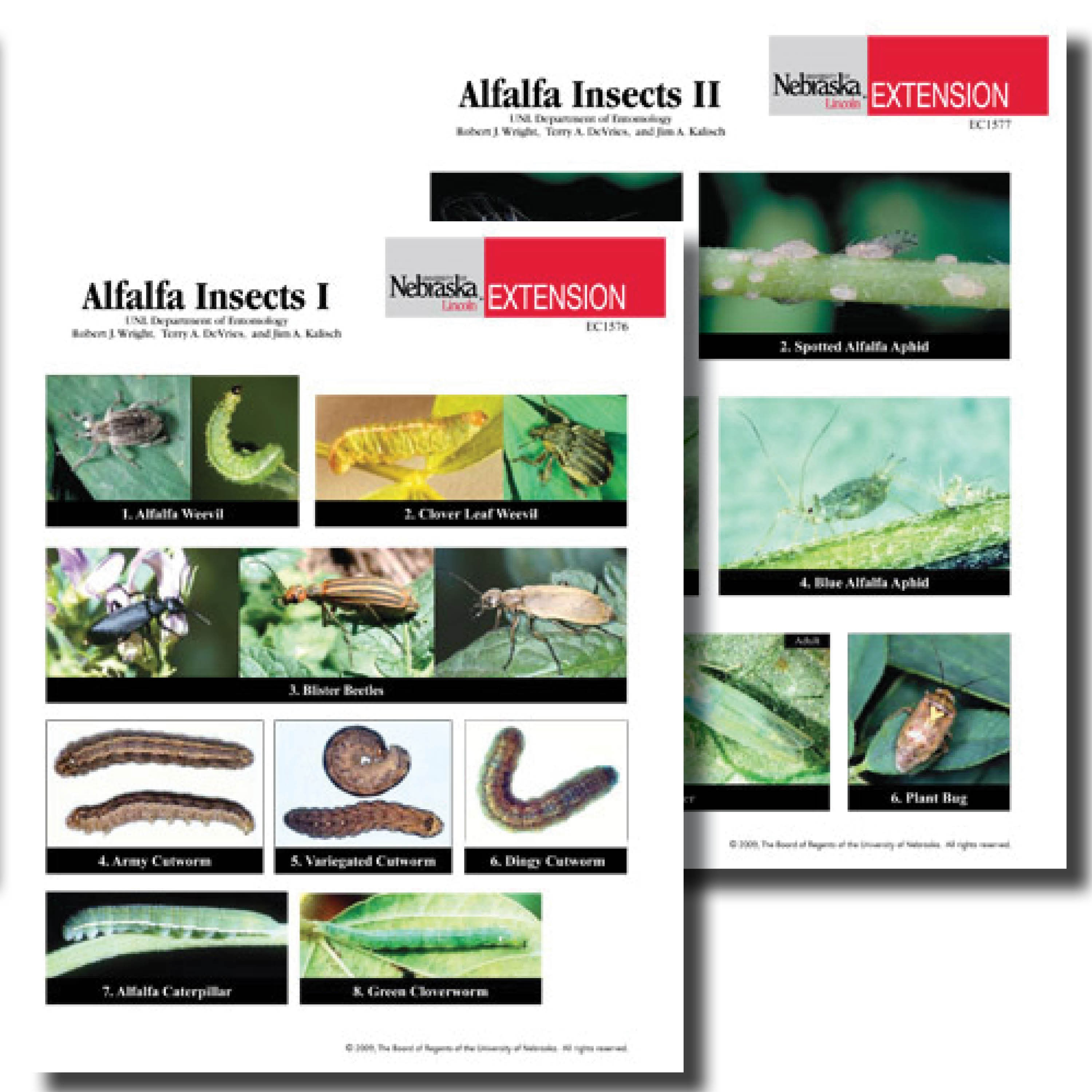 Alfalfa Insects Photo Identification Guides