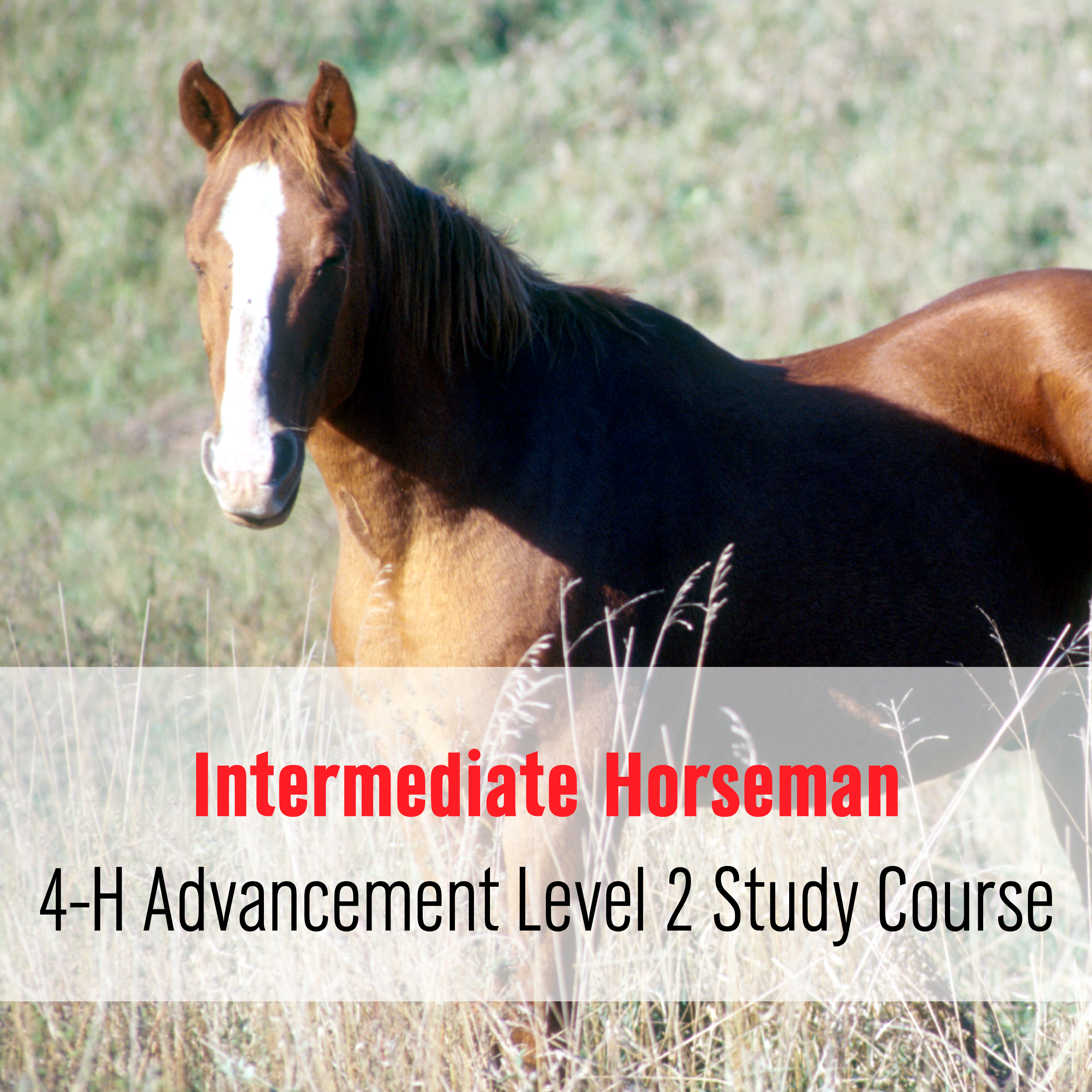 Intermediate Horseman: 4-H Advancement Level 2 Study Course
