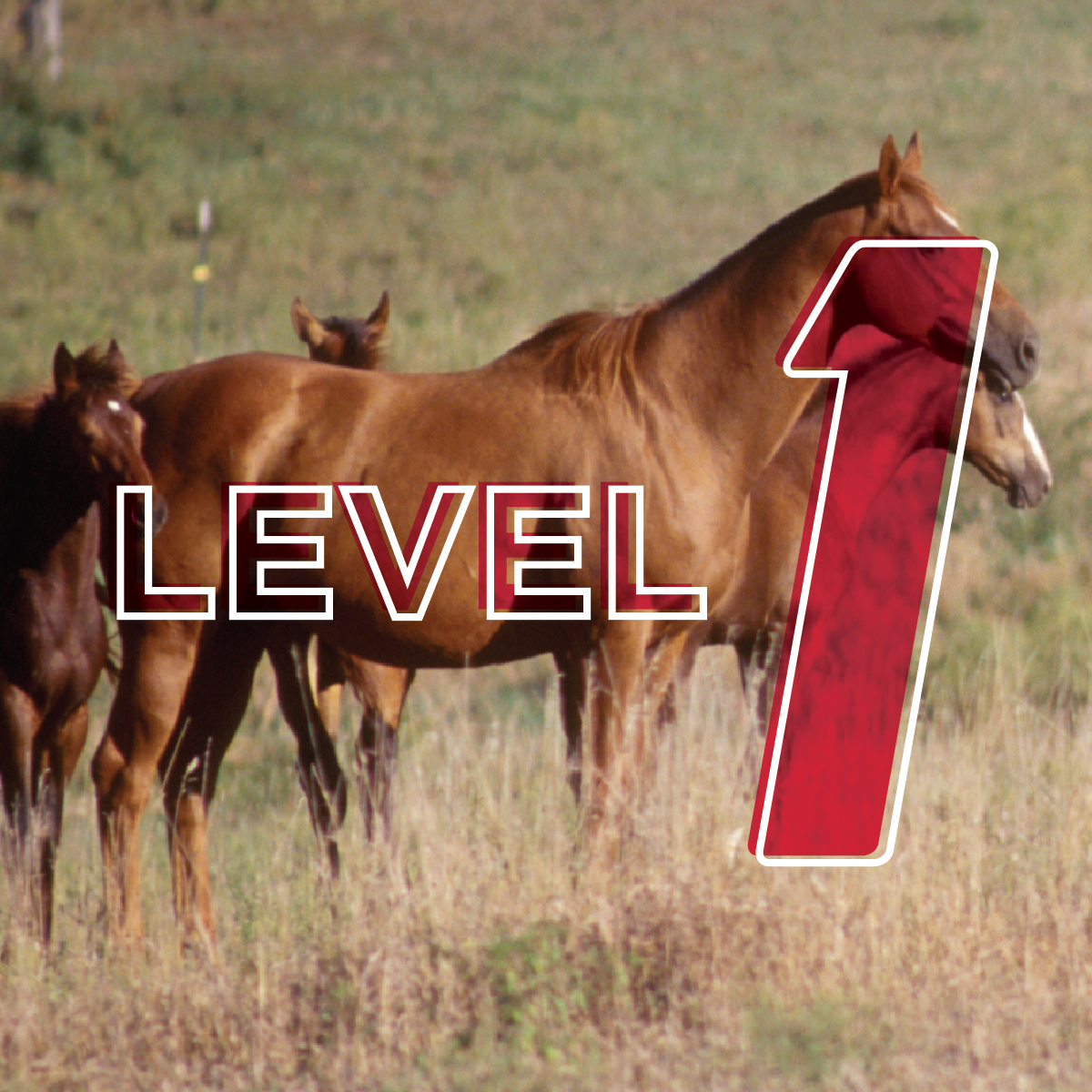 Beginning Horseman: 4-H Advancement Level 1 Online Study Course