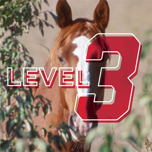 Horseman: 4-H Advancement Level 3 Online Study Course