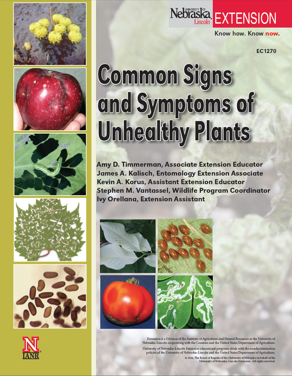 Common Signs and Symptoms of Unhealthy Plants