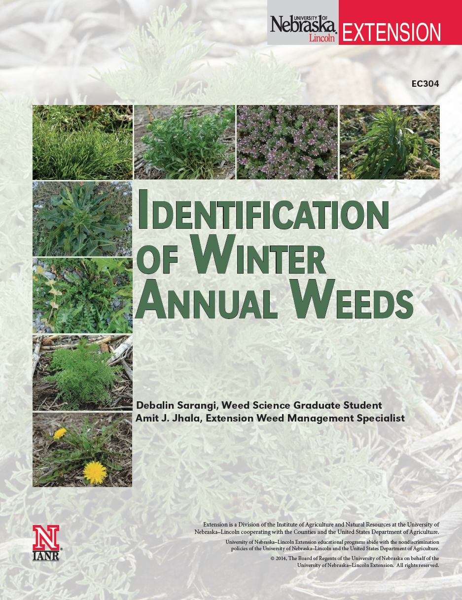Identification of Winter Annual Weeds