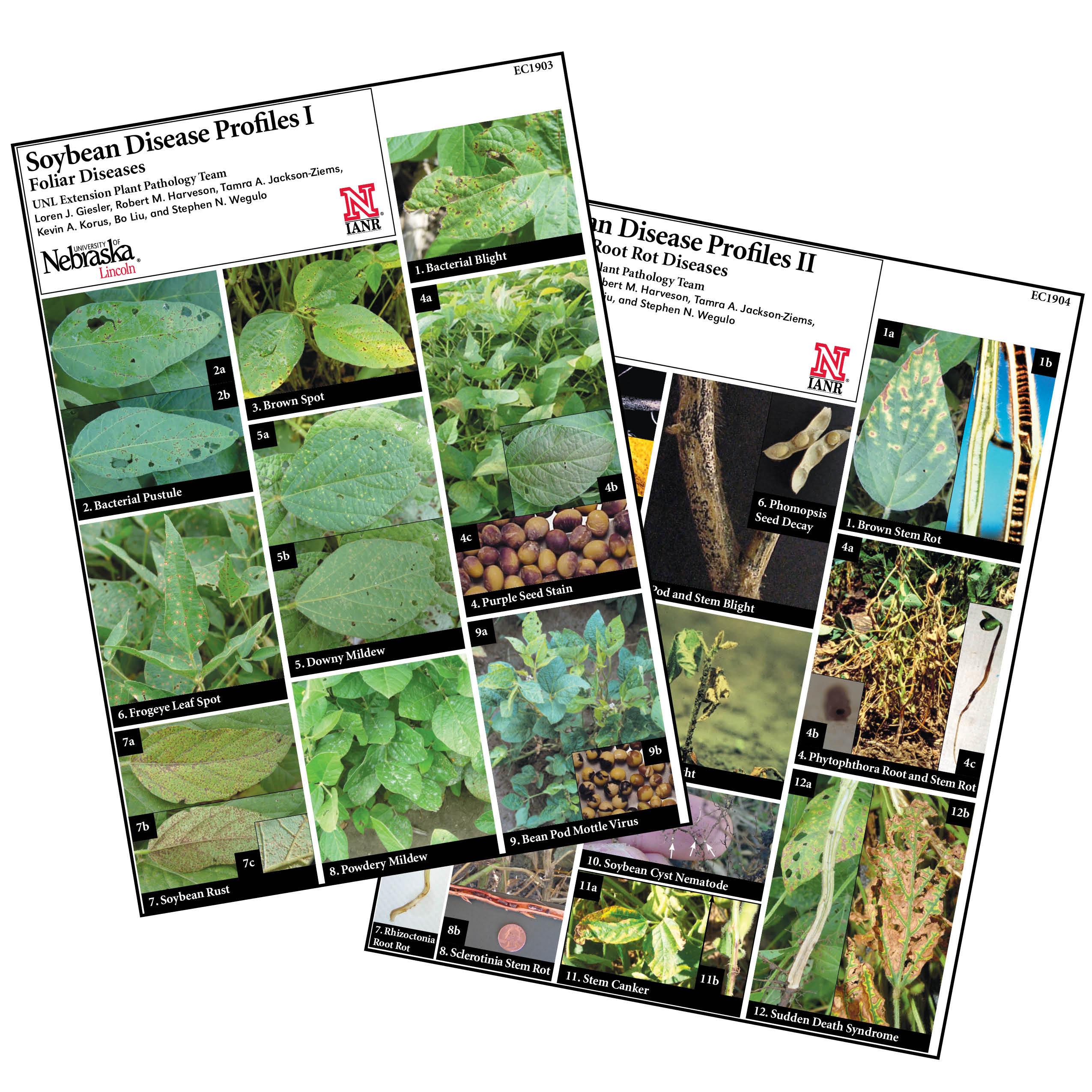 Soybean Disease Profiles