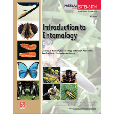 Introduction to Entomology