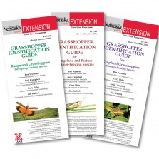 Grasshopper Identification Guides