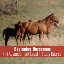 Beginning Horseman: 4-H Advancement Level 1 Study Course
