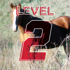Intermediate Horseman: 4-H Advancement Level 2 Online Study Course