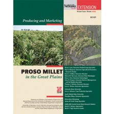 Producing and Marketing Proso Millet in the High Plains